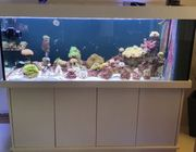 Aquarium Meerwasser komplett 576L Kombination