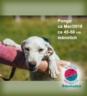Pongo - Magst du mich adoptieren