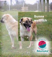 Sunna - ein Traummädchen schnell und