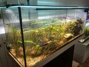 Aquarium 288l mit Aussenfilter LED