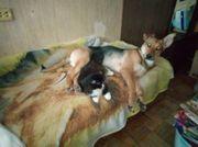 Juna Schäferhund Mix sucht Zuhause