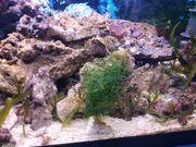 Meerwasser Gestein
