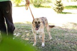 Hunde - Jumbo - will hoch hinaus