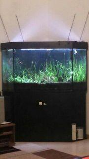 Aquarium Juwel 270 l