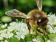 Kaufgrundstück für Bienen- bzw Umweltprojekt