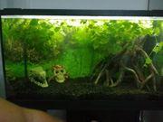 2Axolotl ggf Aquarium komplett