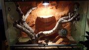 Kornatter mit kompletten Terrariumzubehör
