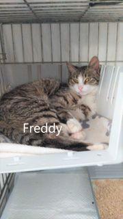 Freddy geb 2020 Kuschelkater sucht