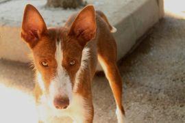 Ungeschliffener Diamant Coto: Kleinanzeigen aus Augsburg Innenstadt - Rubrik Hunde
