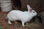 Kaninchen Klara ca 3-4 Jahre