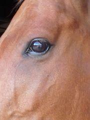 Pflegebeteiligung Pferd