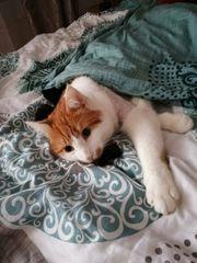 Katzenbetreuung Kleintierbetreuung bei Ihnen vor