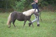 Classic- Pony- Jährling und Stutfohlen
