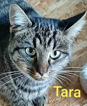 Unsere Tiger - Kätzchen suchen ein