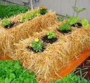 Genial gärtnern auf Stroh