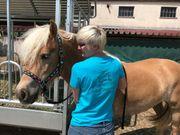EquiVitalis - ganzheitliche Pferdetherapie mobil