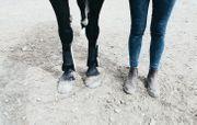 Suche Pony Shetty Biete Bestplatz