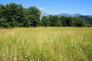 Suche Landwirtschaftliche Pachtflächen