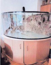500 l Meerwasser Eckaquarium 110x110x70cm