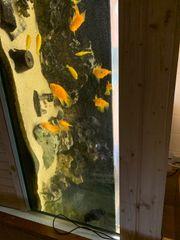 Aquarium ca 660 Liter mit