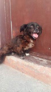 Kleines Hundemädchen Suzi