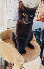 Katzenbaby Viorel sucht ein Zuhause