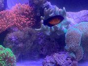 Meerwasser Inhalt Korallen Fische Lebendgestein