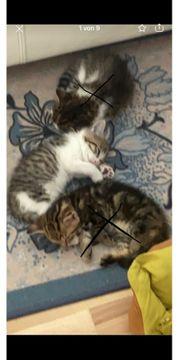 EKZ Baby Katze