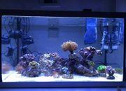 Aquarium Meerwasser Salzwasser Lebendgestein Korallen
