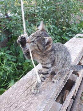 Bild 4 - Junges Kätzchen - Schwedelbach