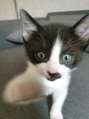 mix kitten abzugeben