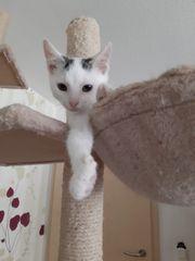 Baby Katze Penny 9 Wochen