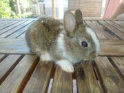 kleine Farben Zwerg Kaninchen Babys