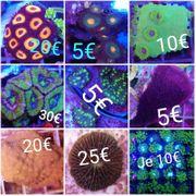 Meerwasser Korallen Ableger Zubehör Aquarium