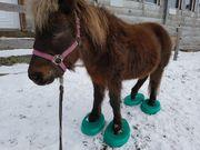 Classic Pony