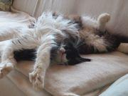 Katzenpension Katzensitter Katzenbetreuung