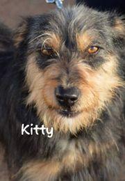 Kitty Mix Mischling in Spanien