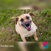 Schila Leni - alias Leni Löwenherz