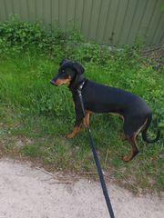 Hund 7 Monate sucht neues