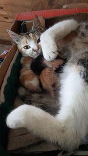 4 Babykatzen