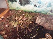 Breitrand und Mauri Landschildkröten DNZ