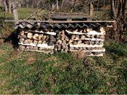 Birkenholz trocken zu verkaufen