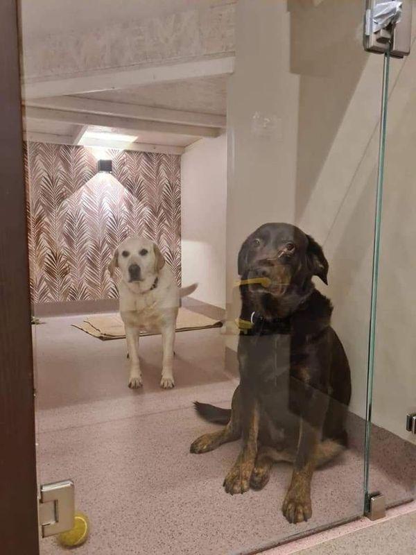 Labrador Mutter 9 Jahre Sohn