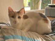 Anfängerkatzen vom Tierschutz suchen gemeinsam