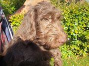Wunderschöne Junghunde suchen ein neues