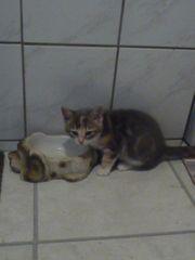 2 Süße verspielte Katzenkinder suchen