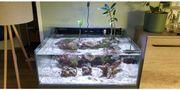 Mangroven Nano Meerwasseraquarium Komplett perfekt