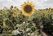 Verpachte landwirtschaftliche Flächen