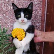 Benny - Sanfter Katzenjunge sitzt auf