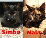 junge verspielte Katzen Nala und